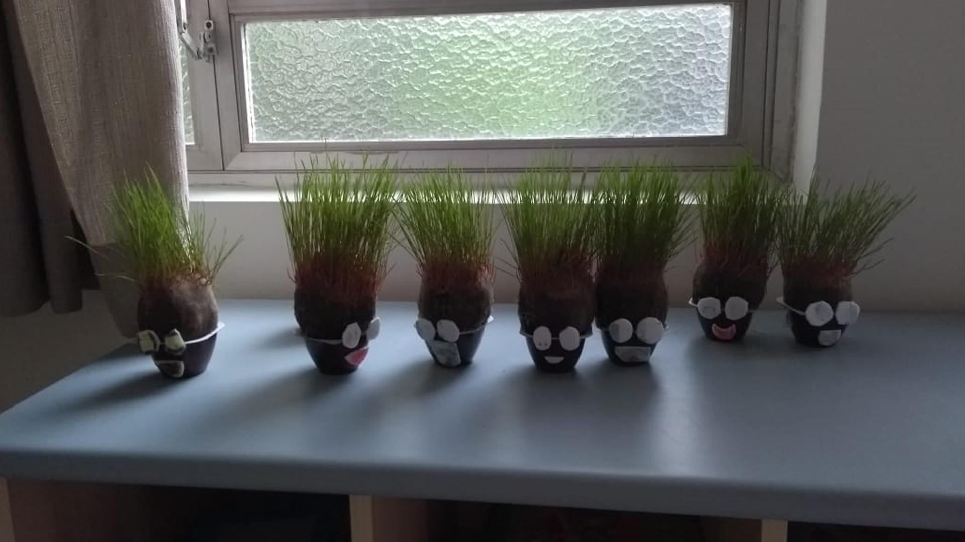 [Plants lifecycle - Hora de levá-las para casa! - Integral 1° e 2° ano ]