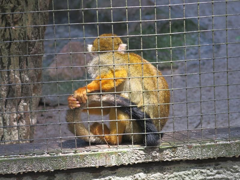 [Visita ao Zooparque - 1º Ano]